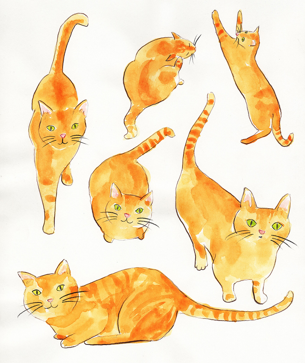 an orange cat in various positions