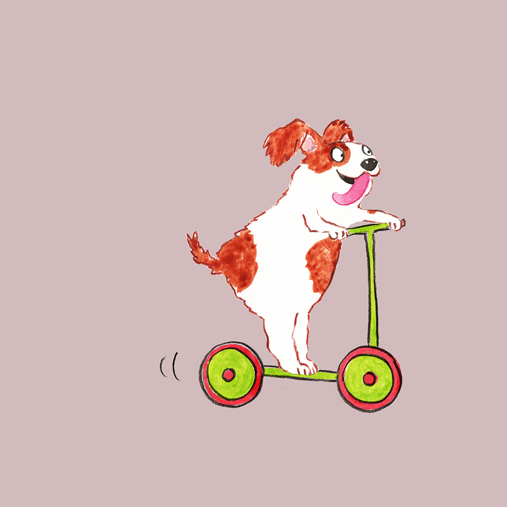 dog on a scooter